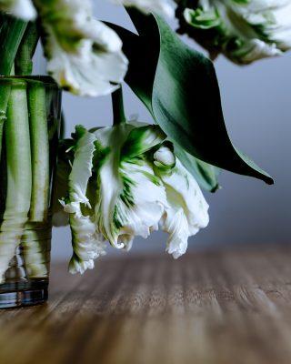 Flowers/fleurs